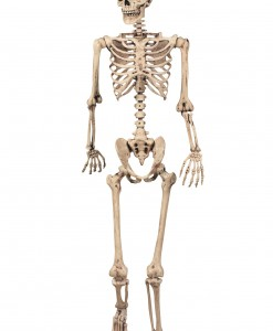 Lifesize Poseable Skeleton