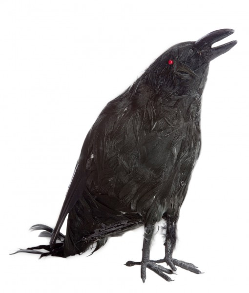 Talking Raven Prop