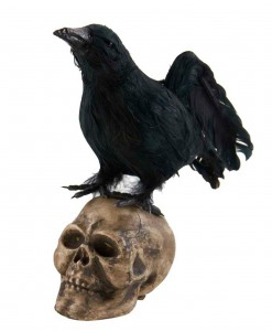 6 Crow Looking Up on Skull