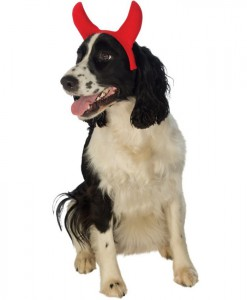 Devil Pet Horns
